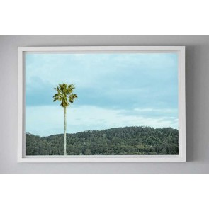 Framed Photography Palm Alone by Escape To Paradise